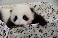 Пятничная панда #155