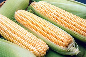 Квоты на экспорт кукурузы упразднены