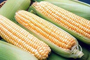 Кукурудза вперше стане основою врожаю зернових