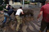 Більш ніж 300 тварин зоопарку Тбілісі загинули від повені