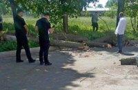 В Черкассах на группу школьников упало дерево