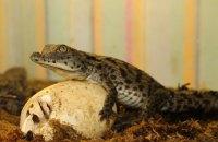 В Харьковском зоопарке вылупились детеныши нильских крокодилов