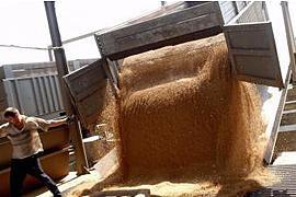 Кабмин продлил квоты на экспорт зерна до 1 июля
