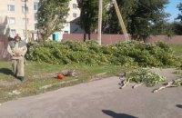 В Запорожской области женщину убило током из-за упавшей ветки дерева