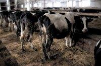 Бахматюк почне постачання яловичини в Китай