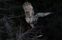 Американские орнитологи объявили победителей конкурса на лучшую фотографию птиц