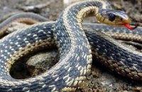 В Івано-Франківській області троє дітей за добу потрапили в реанімацію після укусів змій