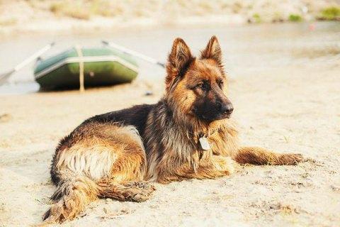 В Германии за 2020 год собрали рекордные 380 млн евро налогов на собак