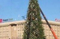 В Киеве установили главную елку страны