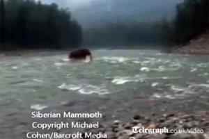 """Британский таблоид опубликовал видеозапись прогулки """"мамонта"""" по реке"""