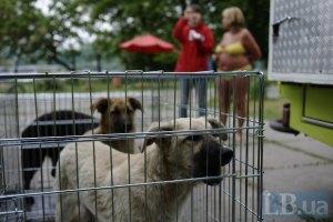 Харківських бездомних собак відправлять до Києва