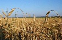Экспорт украинской пшеницы сократится в 2,5 раза, - прогноз