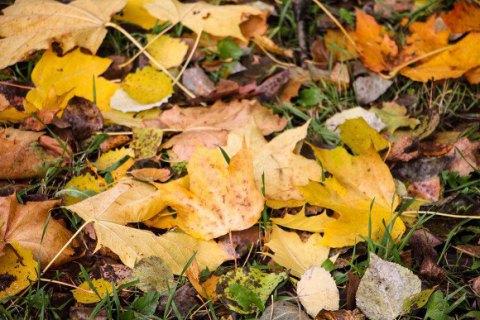 У Києві побудують перший в Україні комплекс переробки опалого листя