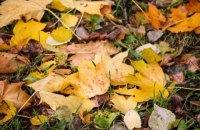 В Киеве построят первый в Украине комплекс по переработке опавших листьев
