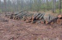 На Сумщині викрили масштабну схему розкрадання лісу