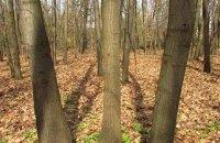 Біличанському лісу повертають ще частину території