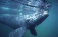 Австралійця оштрафували за катання верхи на киті