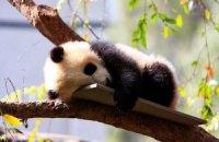 Пятничная панда #160