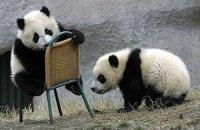 Пятничная панда #38