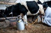 Виробництво молока в Україні зросте вперше з 2005 року