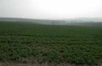 В Чехии нашли участок земли, который до сих пор принадлежит гестапо