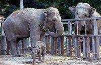 Одесский зоопарк превратят в ботанический сад - СМИ