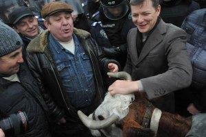 Ляшко и аграрии пытаются провести в Раду корову