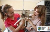 Львов провел первый в мире подсчет уличных котов