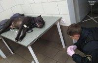 В Киеве полицейскому пришлось выстрелить в собаку, которую пьяный хозяин натравил на людей