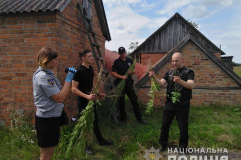 В Киевской области изъяли более 200 кустов конопли и мака