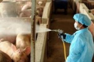 «Откатная пандемия», или Кому выгоден «свиной» грипп в Украине?