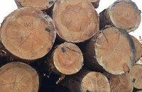 СБУ підтвердила факти незаконної вирубки лісу в Херсонській області, про які говорила Гандзюк