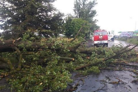 У Львові через падіння дерева у парку загинули чоловік та жінка