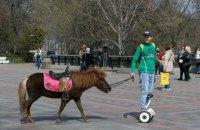 Эксперты обсудят принятие законопроекта о защите животных