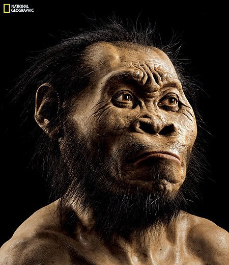 Реконструкция головы Homo naledi