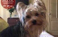 У Києві злодії пограбували квартиру і вкрали собаку