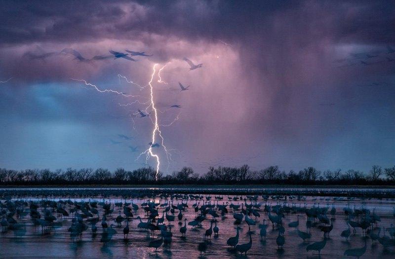 Молния над рекой Вуд во время прилета канадских журавлей на гнездование, штат Небраска.