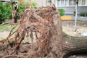 У Донецькій області буря повалила близько тисячі дерев