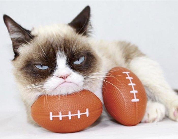 Кіт на ім'я Соус Тардар більш відомий як Grumpy Cat (або Сердитий котик) має 2,7 млн підписників в інстаграм