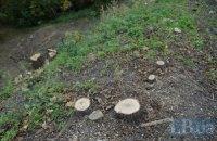 Жители Севастополя отсудили сосновую рощу у горсовета