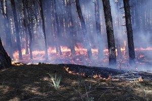 На Днепропетровщине горело почти 5 га леса