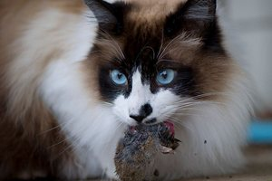 Самые популярные домашние животные в Украине – коты