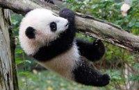 Пятничная панда #73