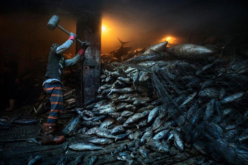 Рабочий разбивает молотом замороженного тунца для погрузки на китайское грузовое судно, Филиппины.