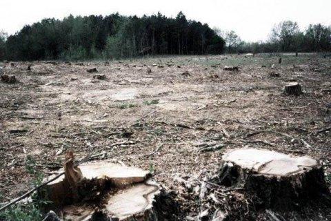 Гройсман поручил провести аэрофотосъемку лесов для мониторинга их вырубки