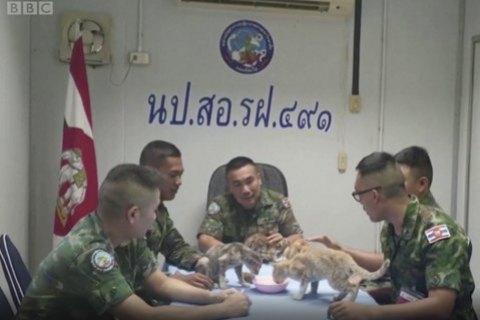 Військовий з ВМС Таїланду повернувся на палаючий корабель, щоб врятувати чотирьох котів