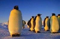 У Норвегії після карантину вакцинують пінгвінів, які мешкають в акваріумі міста Берген, - ЗМІ