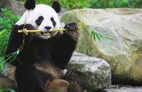 П'ятнична панда #86