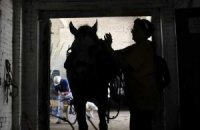В Украине политики массово «подсели» на конный спорт