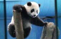 Пятничная панда #177